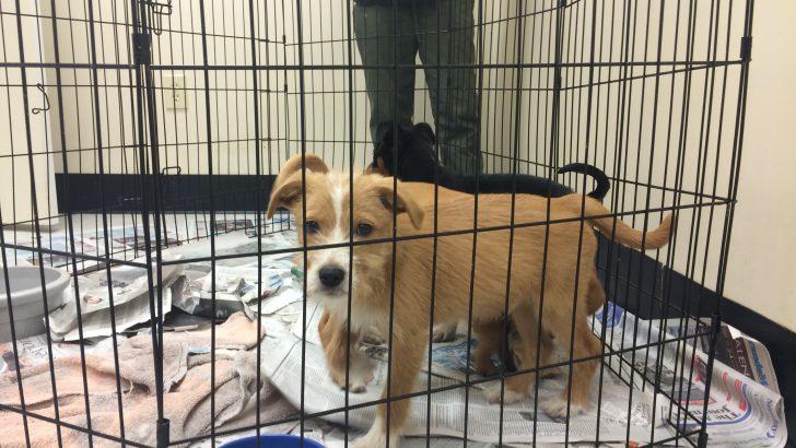 Dog Foster Program