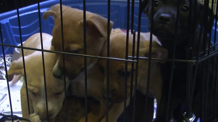 Company Wants your Pet as a Donor