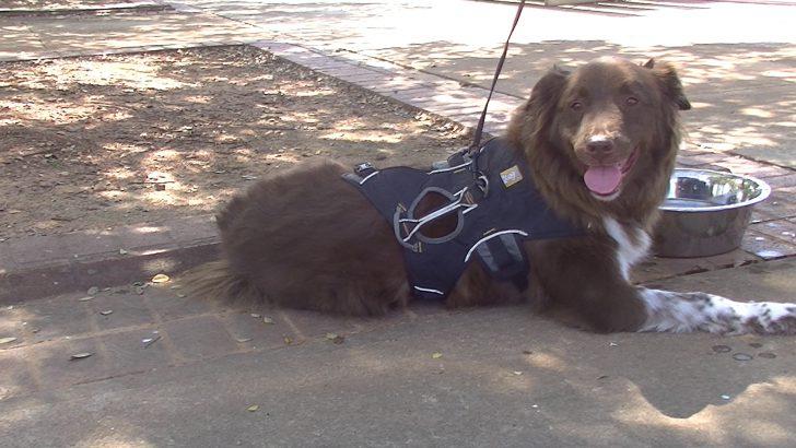 Non-profit hosts 5K to help fund animal adoptions