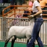 Darby Quakenbush, 15, of Banks County, Georgia, shows her six-month-old sheep, Roman, during a showmanship competition at the Georgia National Fair in Perry, Georgia, on Saturday, October 10, 2015. Quakenbush went on to win first place in the competition. (Photo/Emily Selby, es10150@uga.edu)
