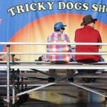 Susan Denton, 58, and Ronnie Denton, 59, both raised in Perry, Georgia, but currently living in Savannah, Georgia, wait for the 10:30 a.m. Tricky Dogs Show to start at the Georgia National Fair in Perry, Georgia, on Saturday, October 10, 2015. Ronnie, a former deputy sheriff, has been to the fair every year and used to work security. (Photo/Maggie Harney, mkharney@uga.edu)