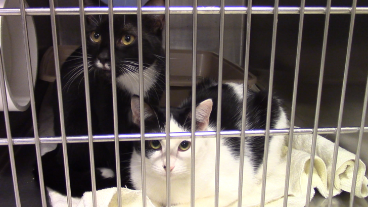 The neuter commuter program: say that five times fast