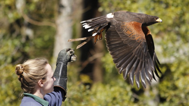 Program Works to Preserve Birds of Prey at Callaway Gardens
