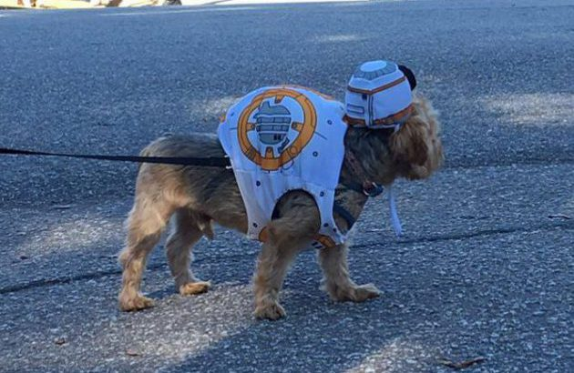 Update: Boo-Le-Bark on The Boulevard