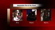 Adoptable Pet of the Week – Can you Help?