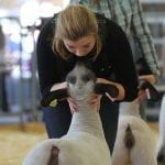 Meredith Camp, 15, from Concord, Georgia, comforts her ewe, Ophelia while competing in the Breeding Ewe Competition at the Georgia National Fair in Perry, Georgia, on Saturday, October 8, 2016. She went on to win the Grand Champion Breeding Ewe Prize. (Photo/Jenn Finch, www.jennfinch.wordpress.com)
