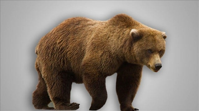 Bear Hollow Zoo Has a New Look This Spring