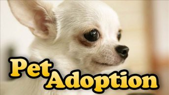 One New Animal Shelter, Many New Pet Homes