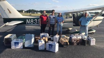 Irma Evacuated Cats Need Your help