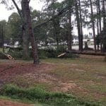 Clean up crews work to clear a fallen pine tree at Fulwood Park in Tifton, GA on Tuesday, Sept. 12, 2017. (Photo courtesy of Grace Holland)