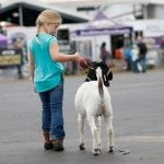 Tanna Mock, 7, from Slyvania, Georgia, walks her goat Jasmine before their show at the Georgia National Fair in Perry, Georgia, on Saturday, October 7, 2017. Mock raised Jasmine from a baby and has been showing goats since pre-k. (Photo/Nicole M. Adamson)