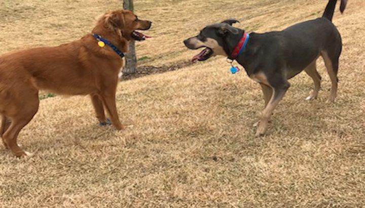 Athens Dog Daycare