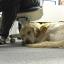 Pets Help Manage Mental Illness